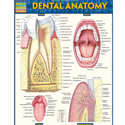 Barcharts: Dental Anatomy